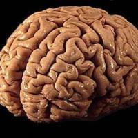 the traumatized brain (TBI)