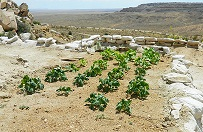 Back to the Future: Hopi Farming