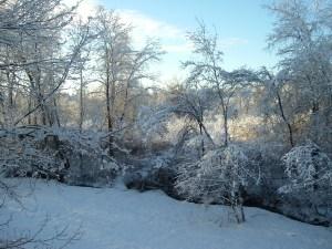 outside my window in western Massachusetts