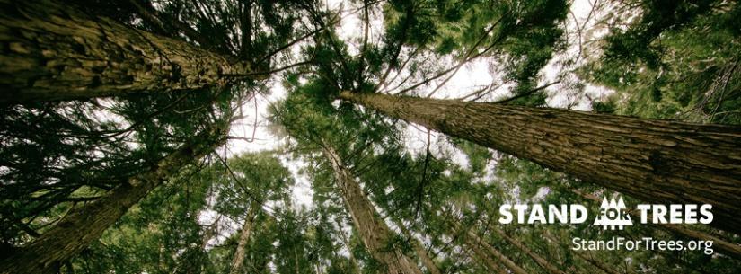 Blog Bonus: Harvard Slavery, Stand For Trees,Drumpf