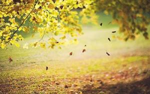 falling-leaves2
