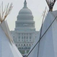 """""""Yellowtail"""" 