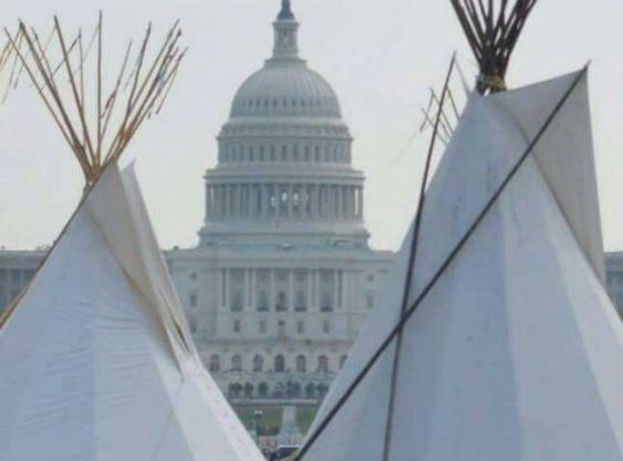 """Yellowtail"" 